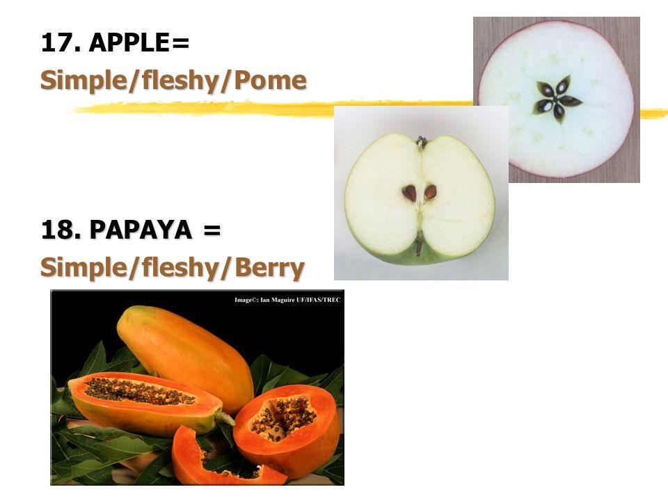 17. APPLE=Simple/fleshy/Pome 18. PAPAYA = Simple/fleshy/Berry