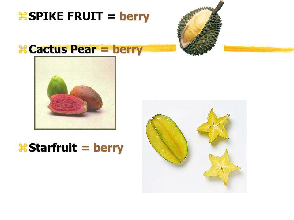 = berry zSPIKE FRUIT = berry zCactus Pear = berry zStarfruit = berry