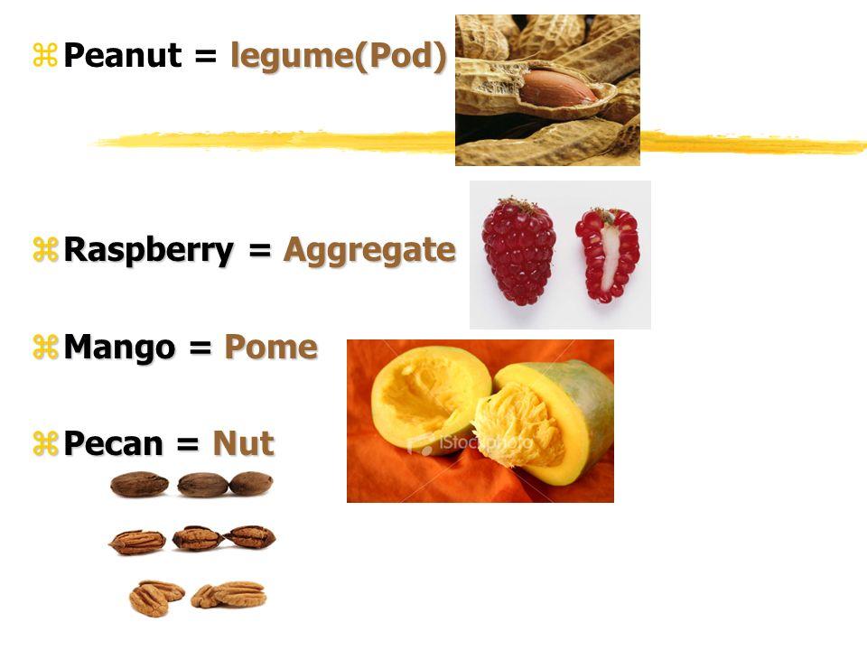 legume(Pod) zPeanut = legume(Pod) zRaspberry = Aggregate zMango = Pome zPecan = Nut