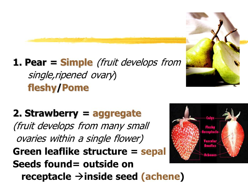 1. Pear = Simple 1. Pear = Simple (fruit develops from single,ripened ovary) fleshy/Pome 2. Strawberry = aggregate (fruit develops from many small ova