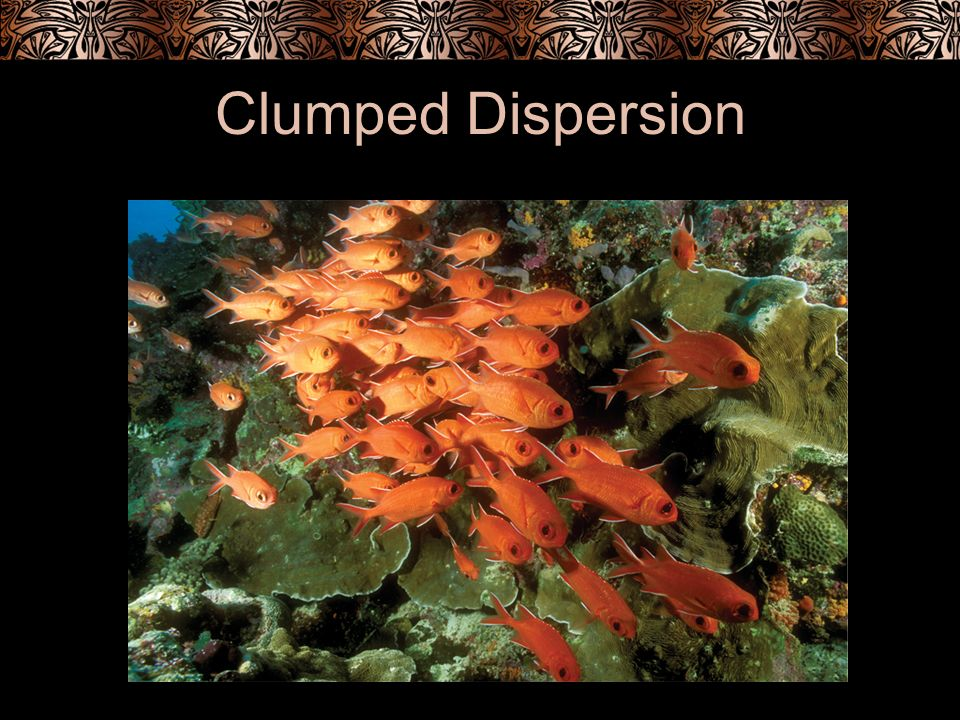 Clumped Dispersion