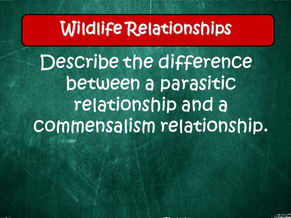 Describe the difference between a parasitic relationship and a commensalism relationship.