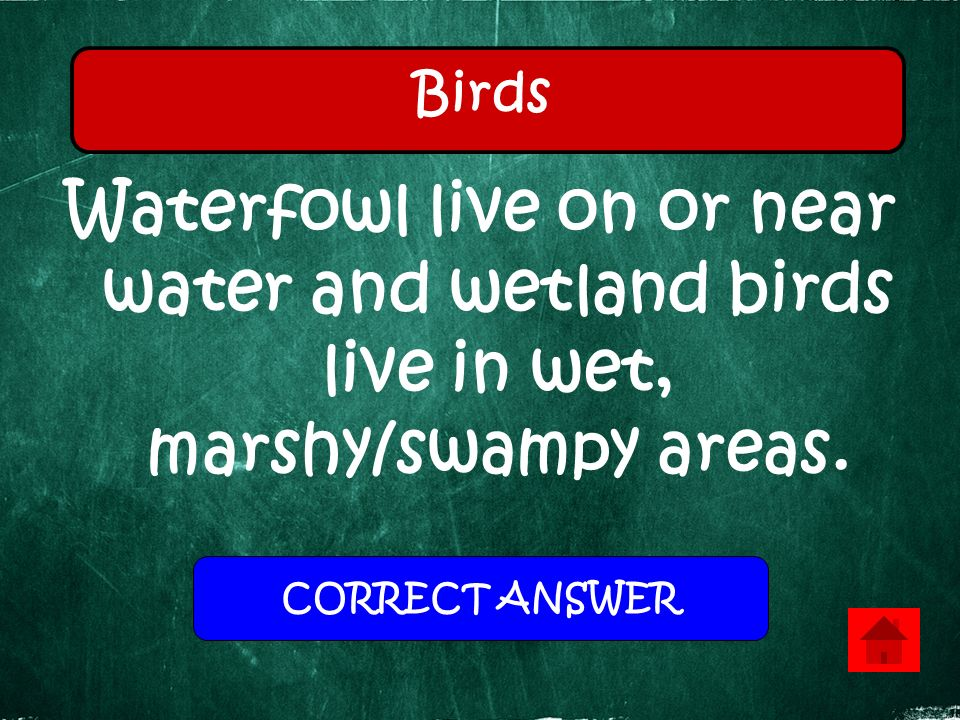 Waterfowl live on or near water and wetland birds live in wet, marshy/swampy areas. Birds CORRECT ANSWER