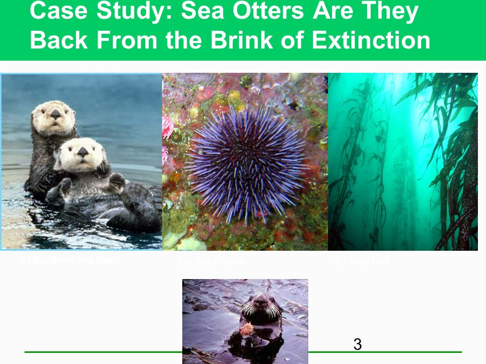 Core Case Study: Southern Sea Otters: Are They Back from the Brink of Extinction? Habitat Hunted: early 1900s Partial recovery Why care about sea otte