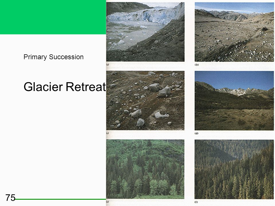 Some Ecosystems Start from Scratch: Primary Succession No soil in a terrestrial system No bottom sediment in an aquatic system Early successional plan