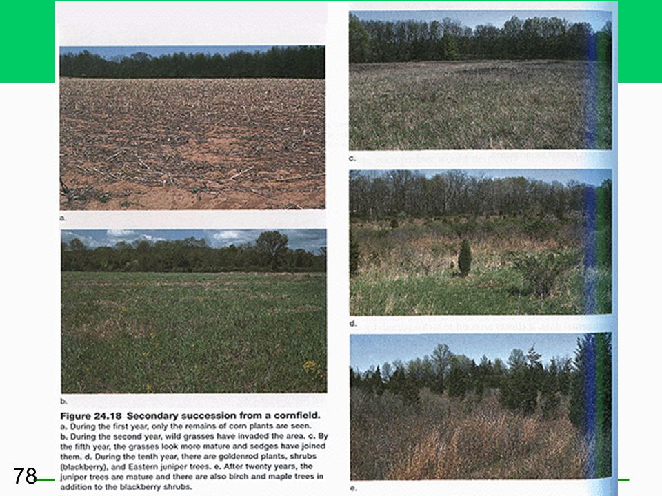 Some Ecosystems Do Not Have to Start from Scratch: Secondary Succession Some soil remains in a terrestrial system Some bottom sediment remains in an a