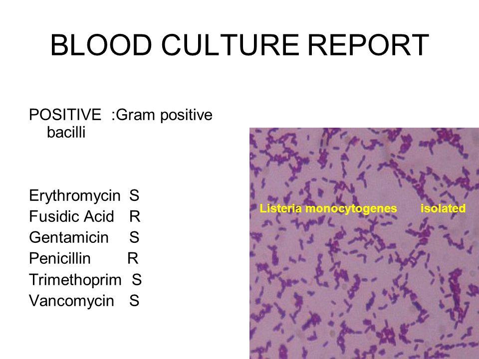 BLOOD CULTURE REPORT POSITIVE :Gram positive bacilli Erythromycin S Fusidic Acid R Gentamicin S Penicillin R Trimethoprim S Vancomycin S Listeria mono