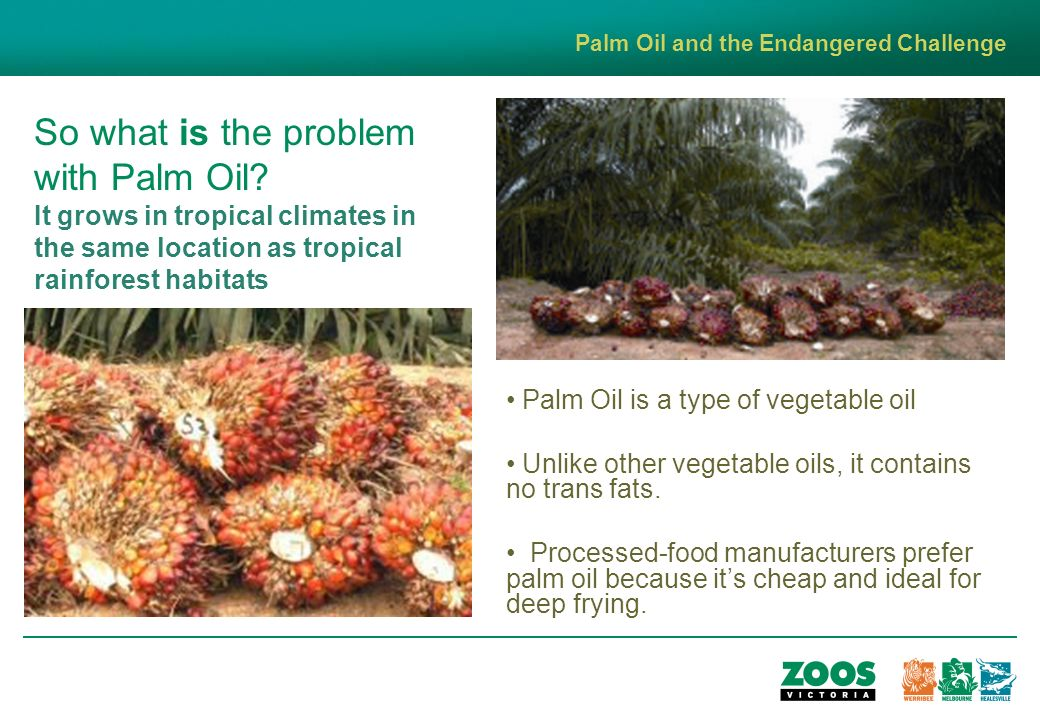 So what is the problem with Palm Oil.