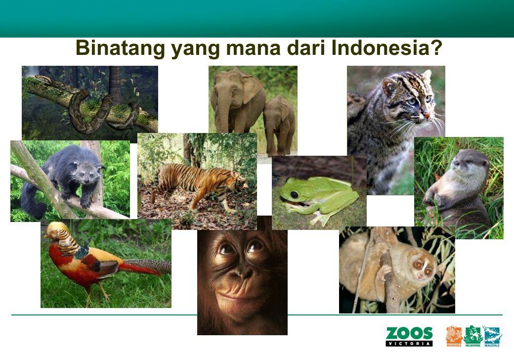 Binatang yang mana dari Indonesia