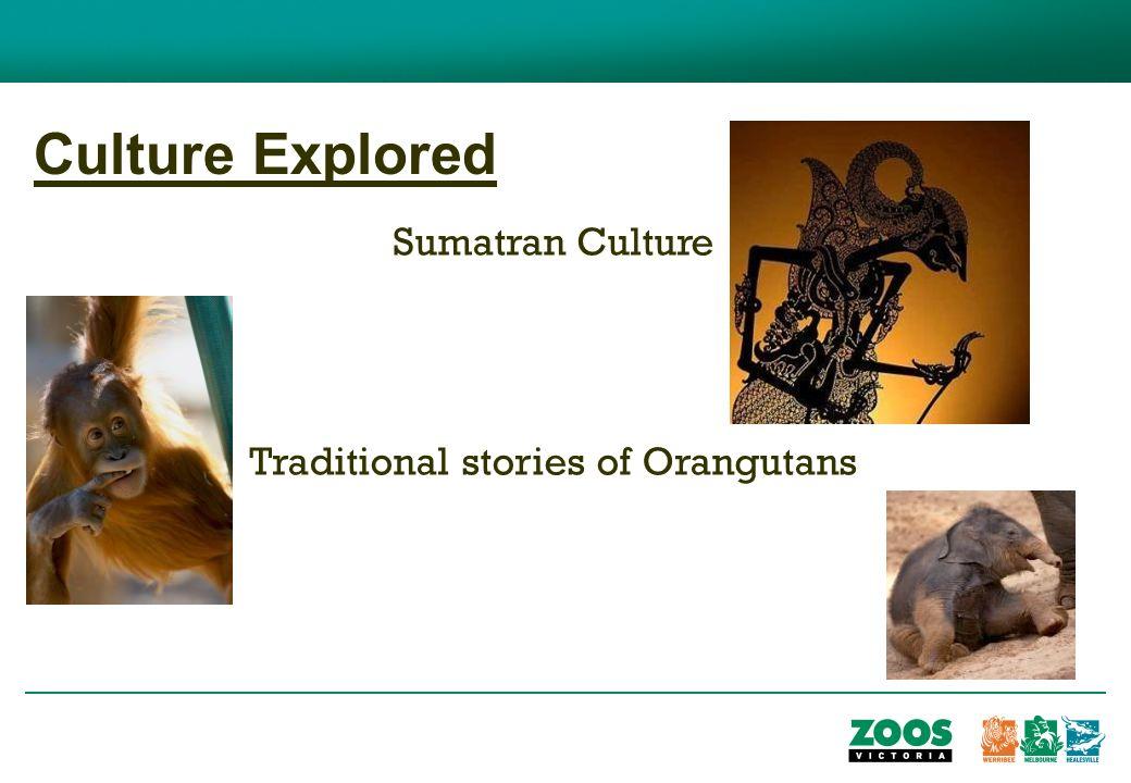 Culture Explored Sumatran Culture Traditional stories of Orangutans