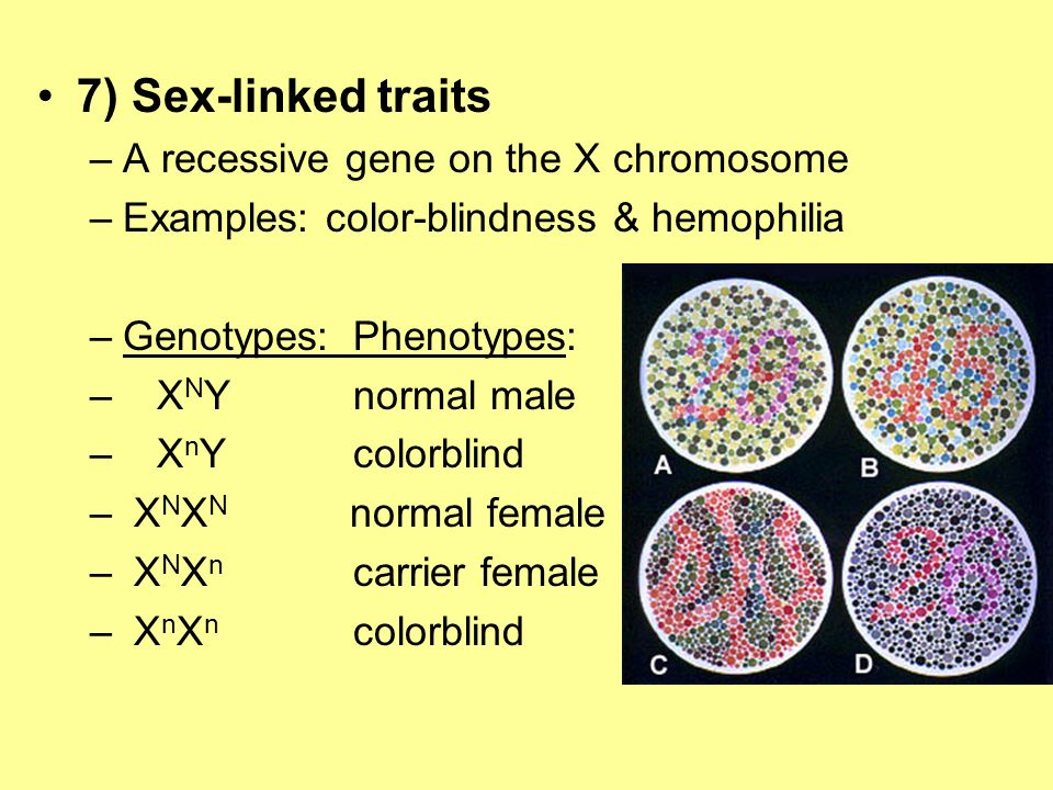 7) Sex-linked traits –A recessive gene on the X chromosome –Examples: color-blindness & hemophilia –Genotypes:Phenotypes: – X N Ynormal male – X n Yco