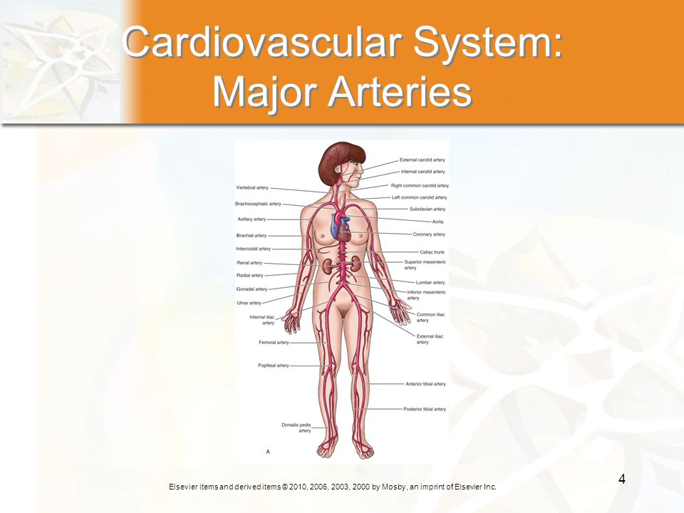Elsevier items and derived items © 2010, 2006, 2003, 2000 by Mosby, an imprint of Elsevier Inc. 4 Cardiovascular System: Major Arteries
