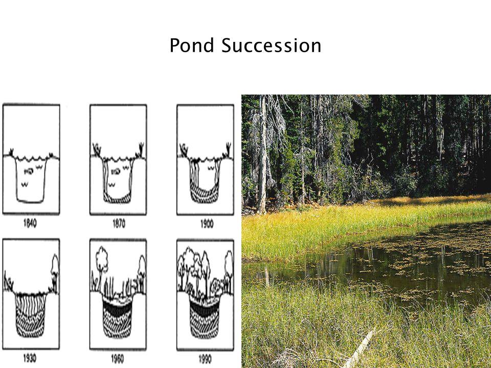 Pond Succession