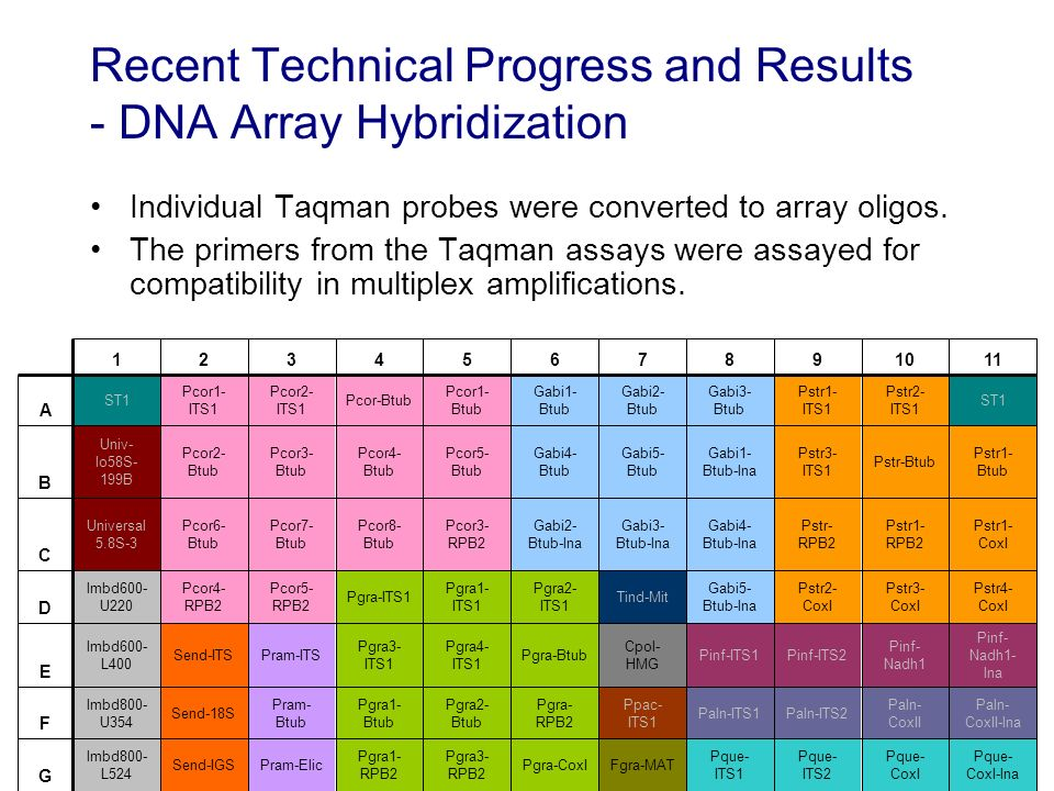 Recent Technical Progress and Results - DNA Array Hybridization Individual Taqman probes were converted to array oligos.