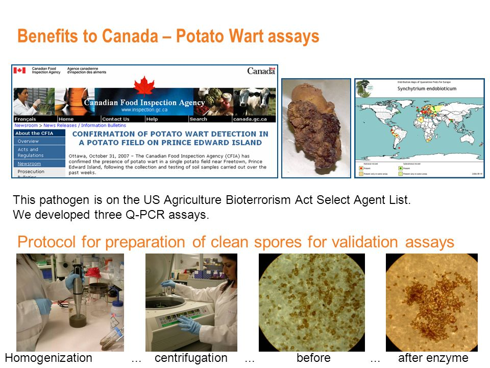 Benefits to Canada – Potato Wart assays This pathogen is on the US Agriculture Bioterrorism Act Select Agent List.
