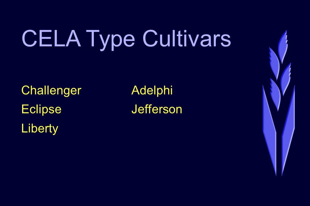 CELA Type Cultivars ChallengerAdelphi EclipseJefferson Liberty