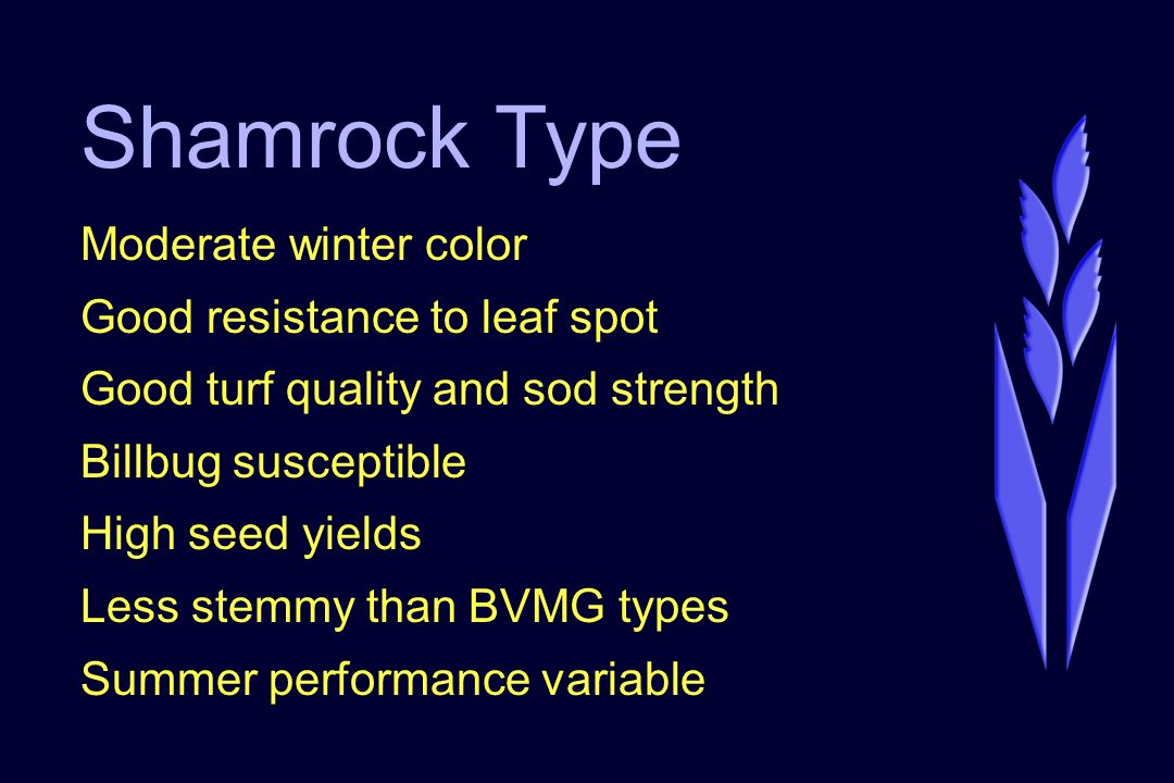 Shamrock Type Moderate winter color Good resistance to leaf spot Good turf quality and sod strength Billbug susceptible High seed yields Less stemmy than BVMG types Summer performance variable