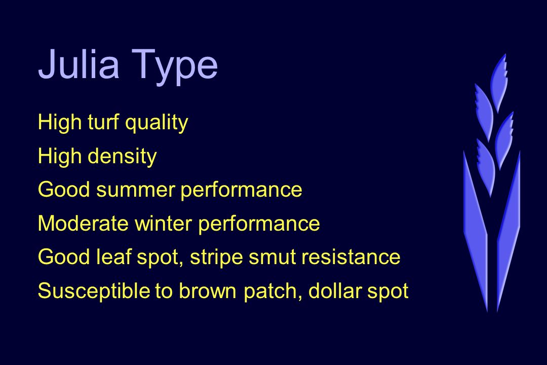 Julia Type High turf quality High density Good summer performance Moderate winter performance Good leaf spot, stripe smut resistance Susceptible to brown patch, dollar spot