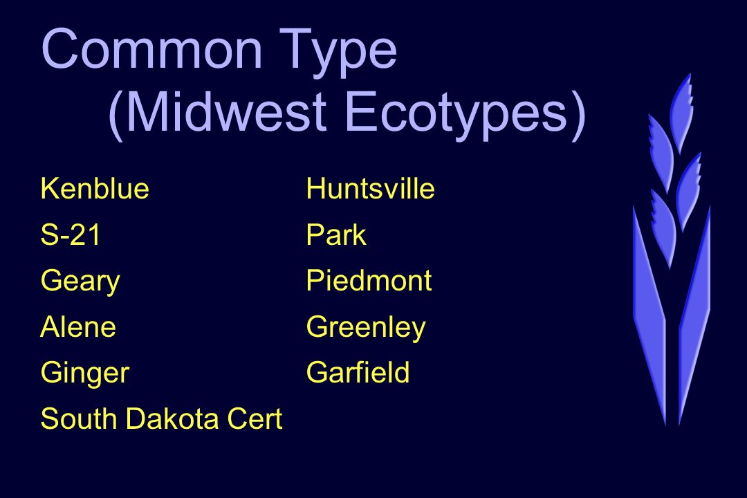Common Type (Midwest Ecotypes) KenblueHuntsville S-21Park GearyPiedmont AleneGreenley GingerGarfield South Dakota Cert