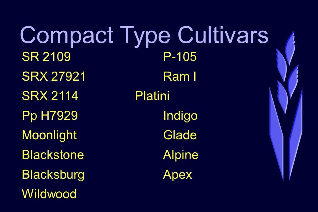 Compact Type Cultivars SR 2109P-105 SRX 27921Ram I SRX 2114Platini Pp H7929Indigo MoonlightGlade BlackstoneAlpine BlacksburgApex Wildwood