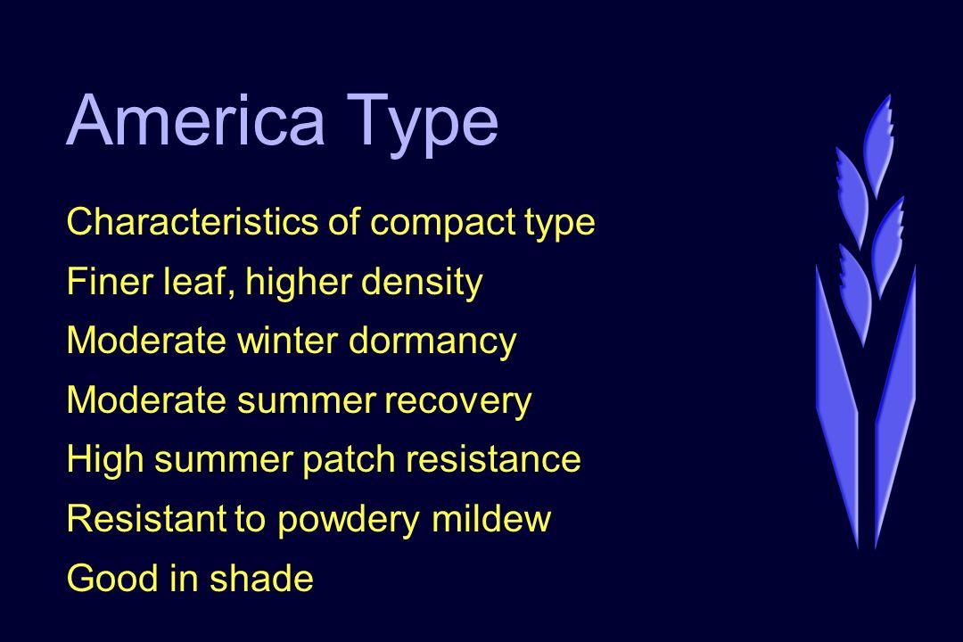America Type Cultivars ShowcaseApollo SR 2284Brilliant SRX 2394Langara AmericaUnique Many experimentals in new NTEP