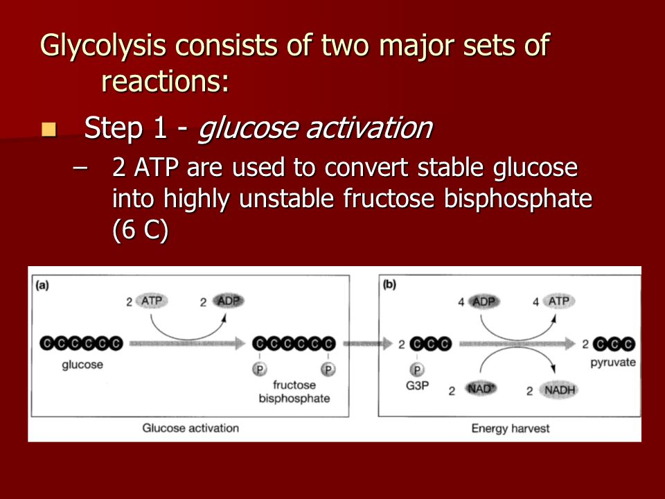 Glycolysis consists of two major sets of reactions: Step 1 - glucose activation Step 1 - glucose activation –2 ATP are used to convert stable glucose