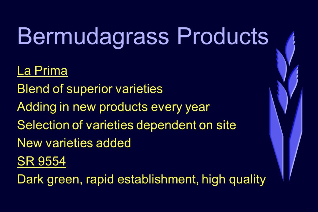 Bermudagrass Products La Prima Blend of superior varieties Adding in new products every year Selection of varieties dependent on site New varieties added SR 9554 Dark green, rapid establishment, high quality