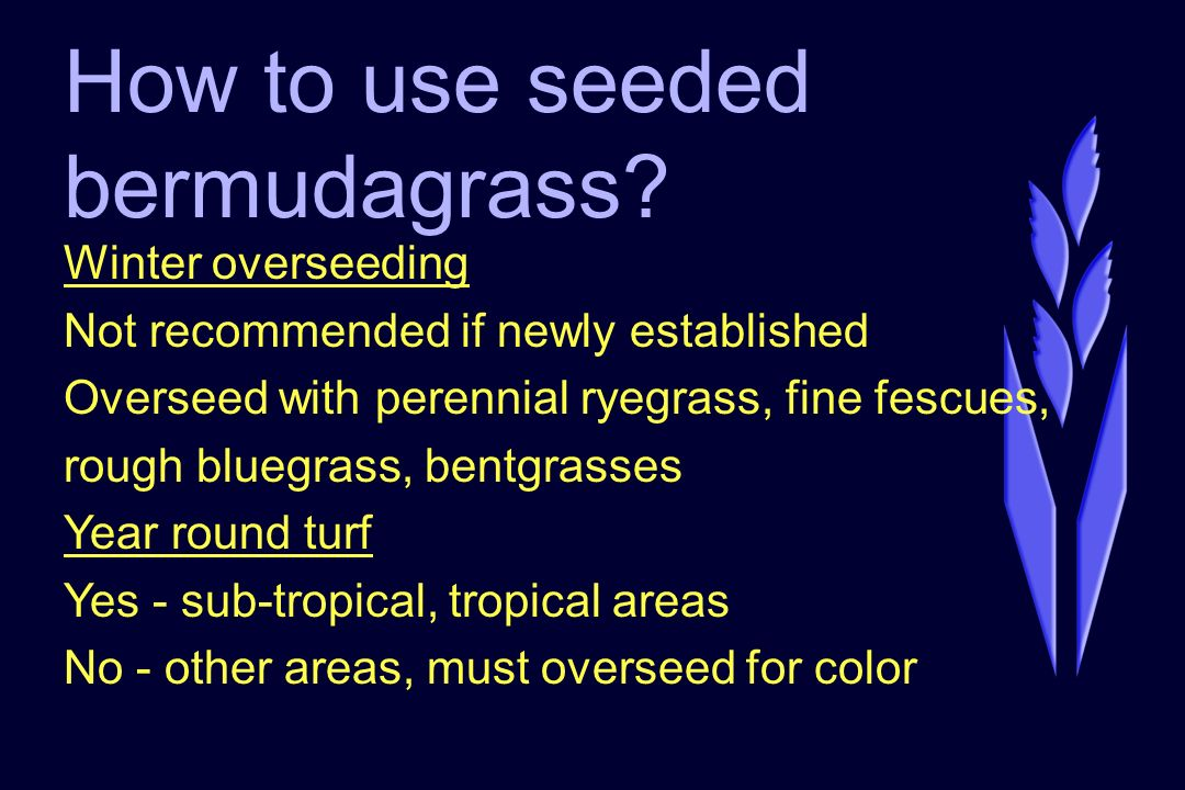 How to use seeded bermudagrass.