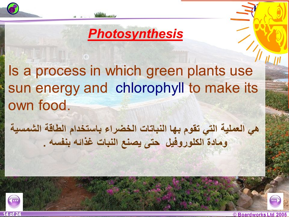 © Boardworks Ltd 2004 1 of 20 © Boardworks Ltd 2005 14 of 24 Photosynthesis Is a process in which green plants use sun energy and chlorophyll to make