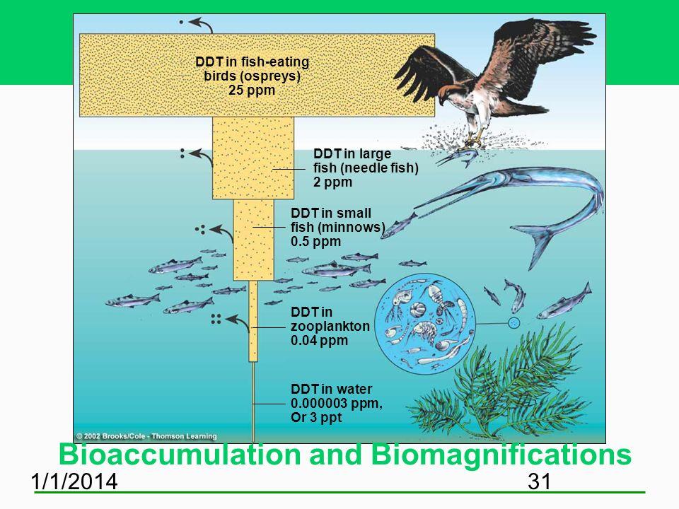 1/1/201431 DDT in fish-eating birds (ospreys) 25 ppm DDT in large fish (needle fish) 2 ppm DDT in small fish (minnows) 0.5 ppm DDT in zooplankton 0.04