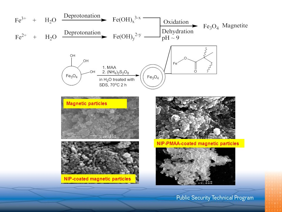 NIP-PMAA-coated magnetic particles NIP-coated magnetic particles Magnetic particles