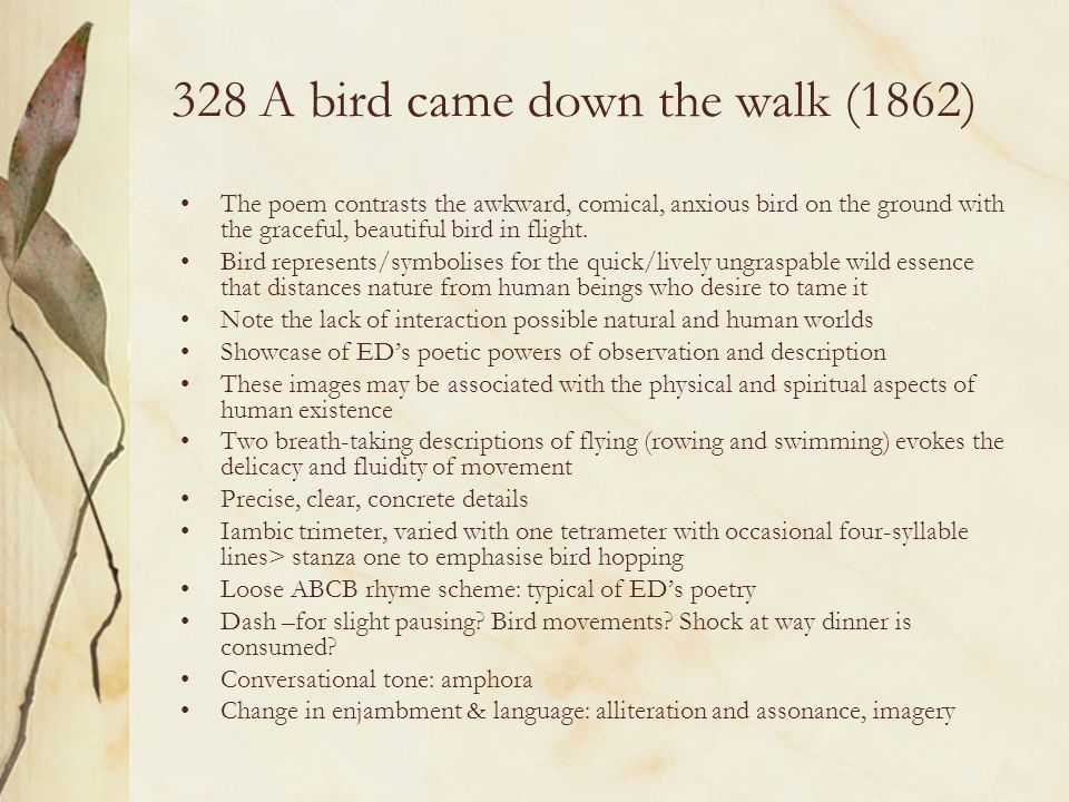 328 A bird came down the walk (1862) The poem contrasts the awkward, comical, anxious bird on the ground with the graceful, beautiful bird in flight.