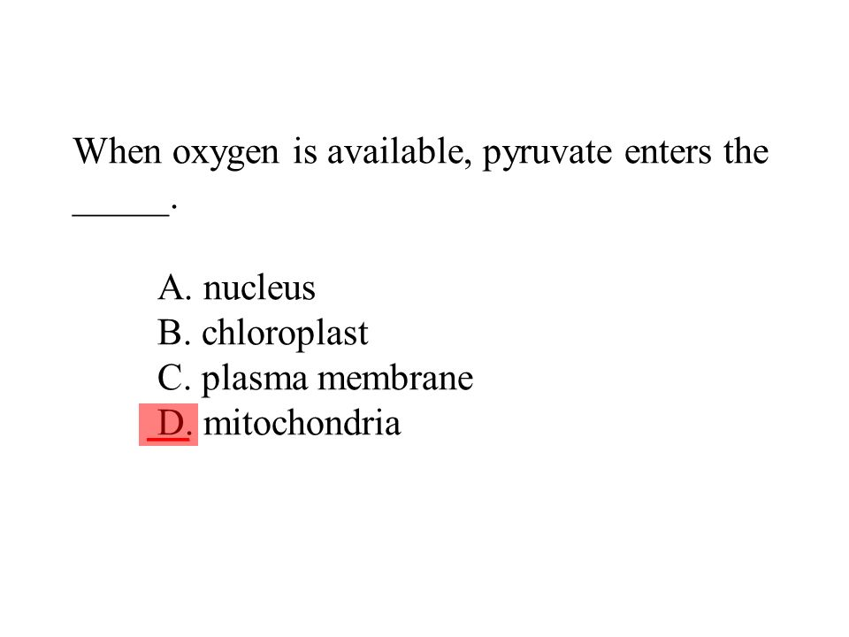 When oxygen is available, pyruvate enters the _____. A. nucleus B. chloroplast C. plasma membrane D. mitochondria ___