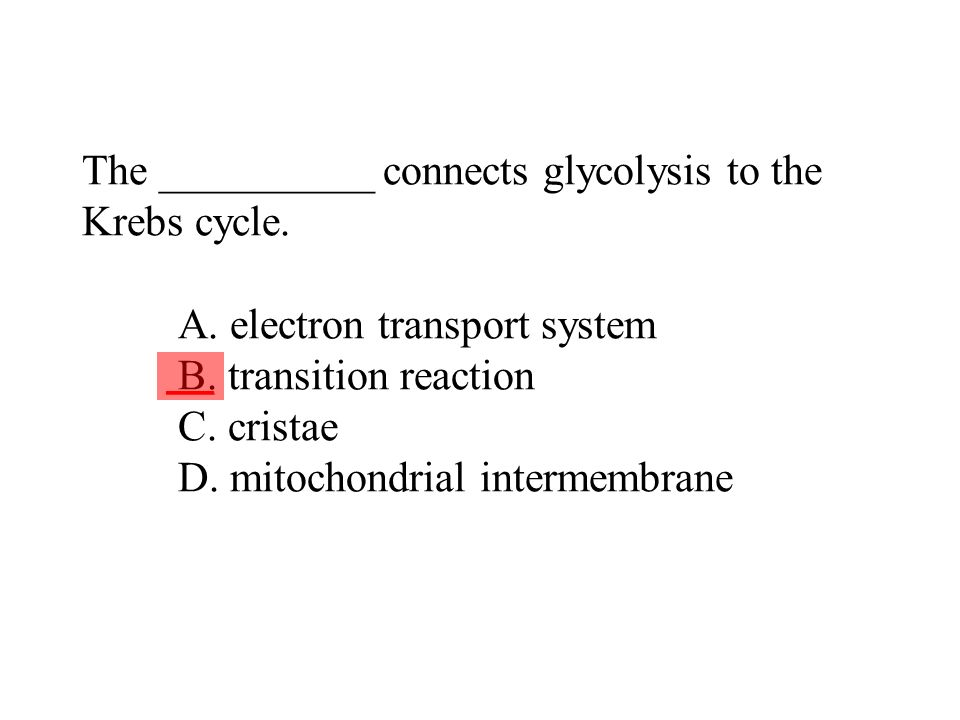 The __________ connects glycolysis to the Krebs cycle. A. electron transport system B. transition reaction C. cristae D. mitochondrial intermembrane _