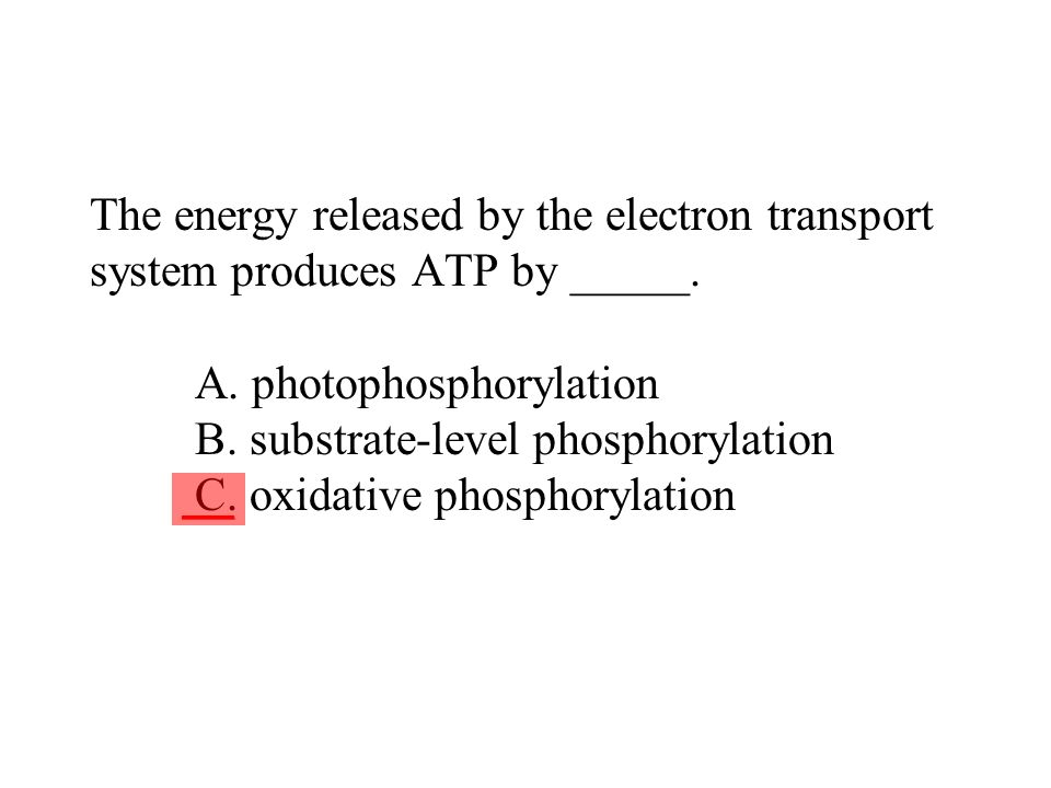 The energy released by the electron transport system produces ATP by _____. A. photophosphorylation B. substrate-level phosphorylation C. oxidative ph