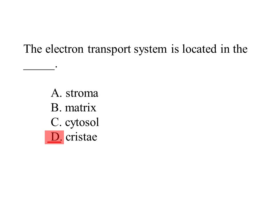 The electron transport system is located in the _____. A. stroma B. matrix C. cytosol D. cristae ___