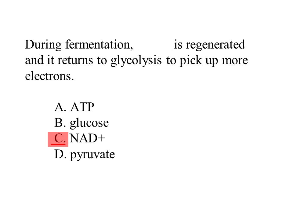 During fermentation, _____ is regenerated and it returns to glycolysis to pick up more electrons. A. ATP B. glucose C. NAD+ D. pyruvate ___
