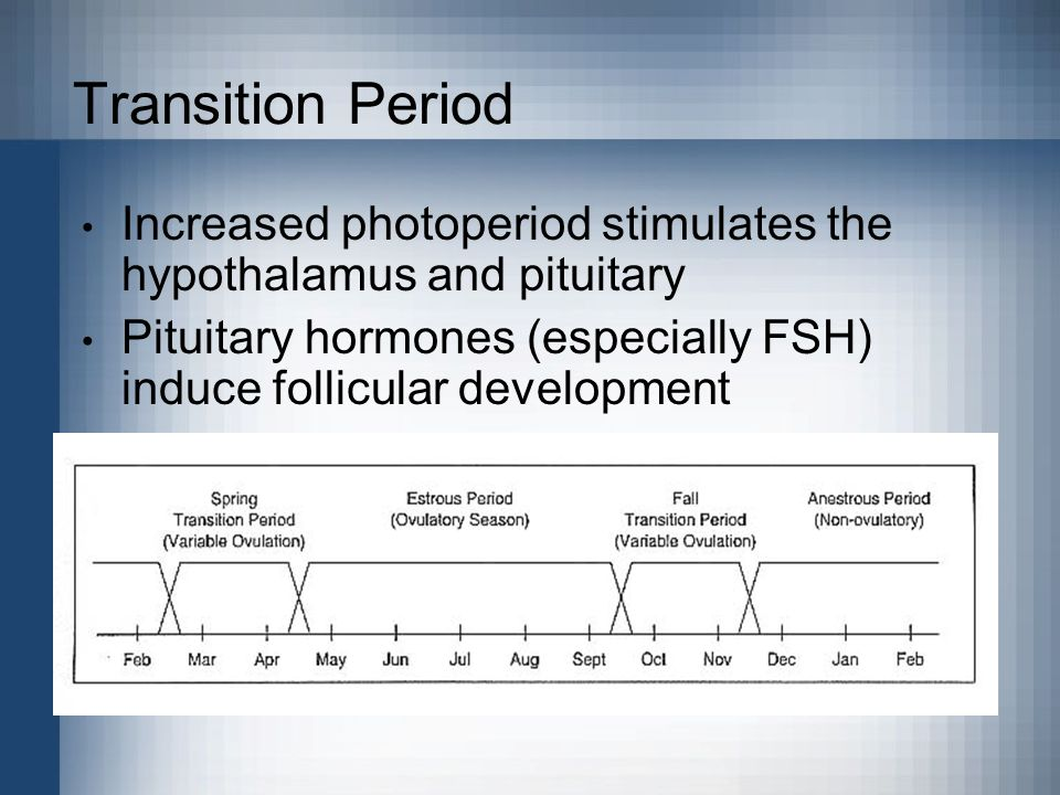 Transition Period Increased photoperiod stimulates the hypothalamus and pituitary Pituitary hormones (especially FSH) induce follicular development