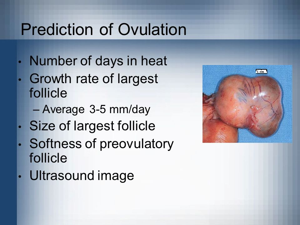 Prediction of Ovulation Number of days in heat Growth rate of largest follicle –Average 3-5 mm/day Size of largest follicle Softness of preovulatory f