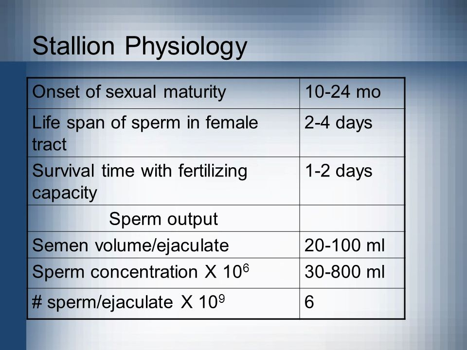 Stallion Physiology Onset of sexual maturity10-24 mo Life span of sperm in female tract 2-4 days Survival time with fertilizing capacity 1-2 days Sper