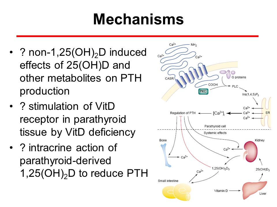 Mechanisms ? non-1,25(OH) 2 D induced effects of 25(OH)D and other metabolites on PTH production ? stimulation of VitD receptor in parathyroid tissue