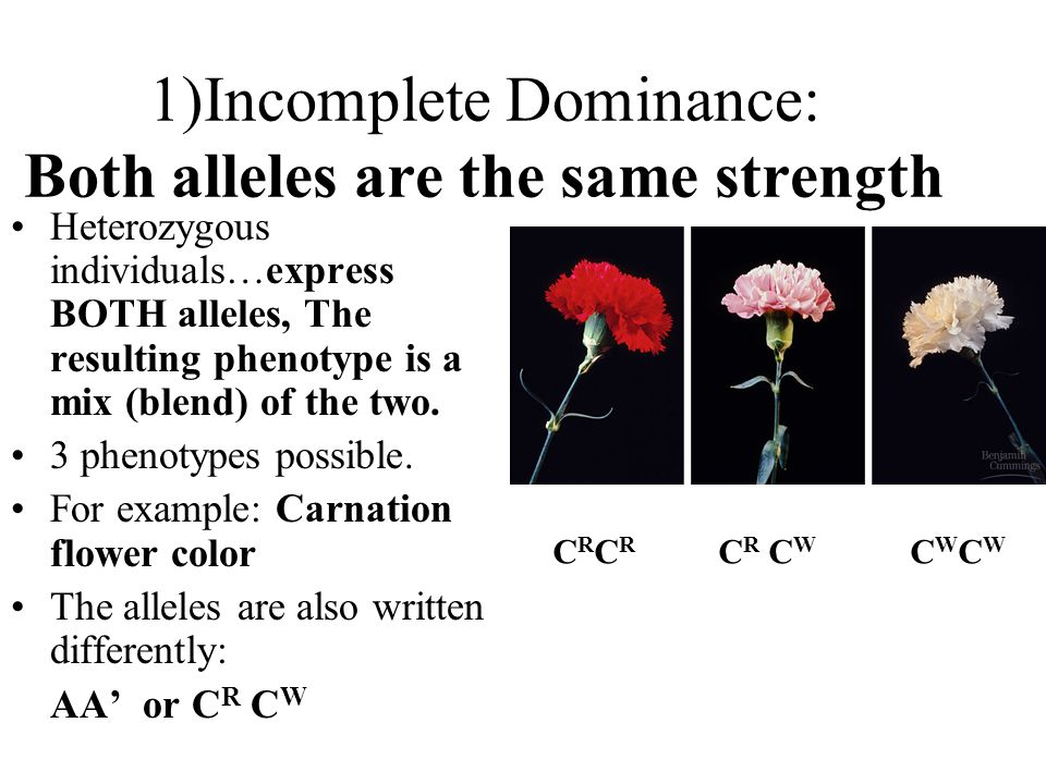 1)Incomplete Dominance: Both alleles are the same strength Heterozygous individuals…express BOTH alleles, The resulting phenotype is a mix (blend) of