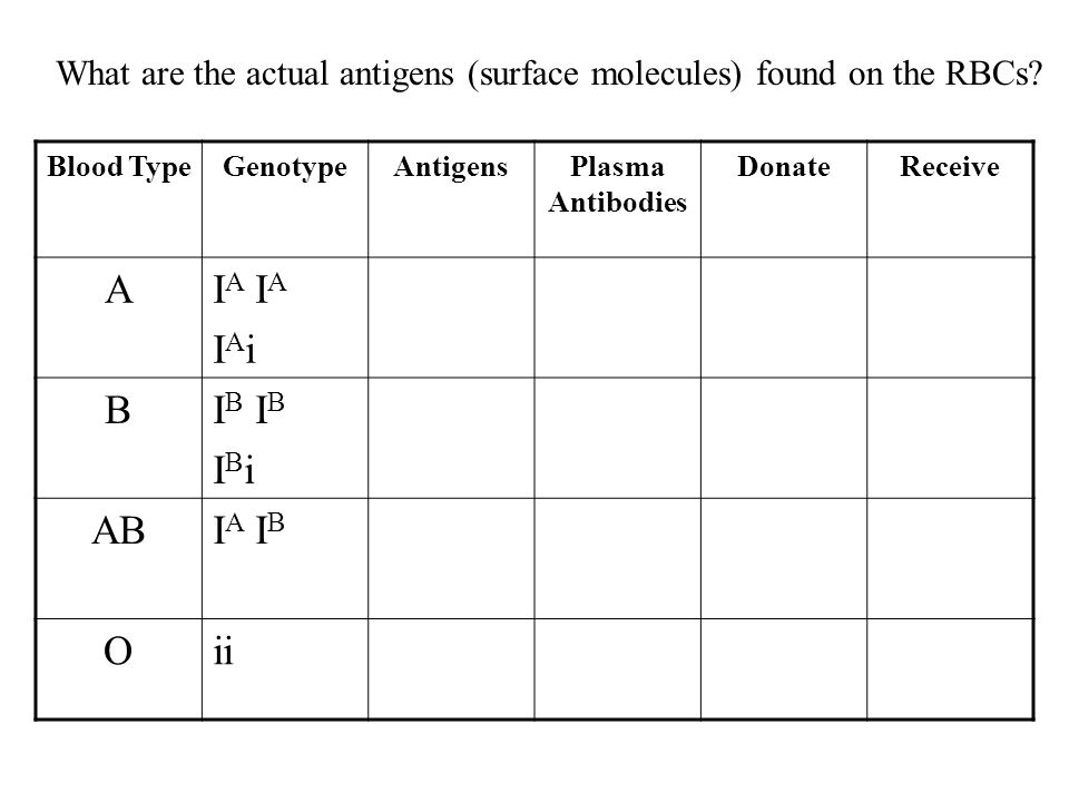 Blood TypeGenotypeAntigensPlasma Antibodies DonateReceive AI A I A i BI B I B i ABI A I B Oii What are the actual antigens (surface molecules) found o