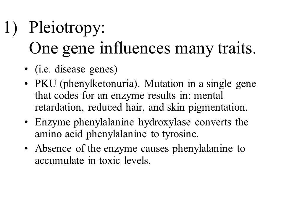 1)Pleiotropy: One gene influences many traits. (i.e. disease genes) PKU (phenylketonuria). Mutation in a single gene that codes for an enzyme results