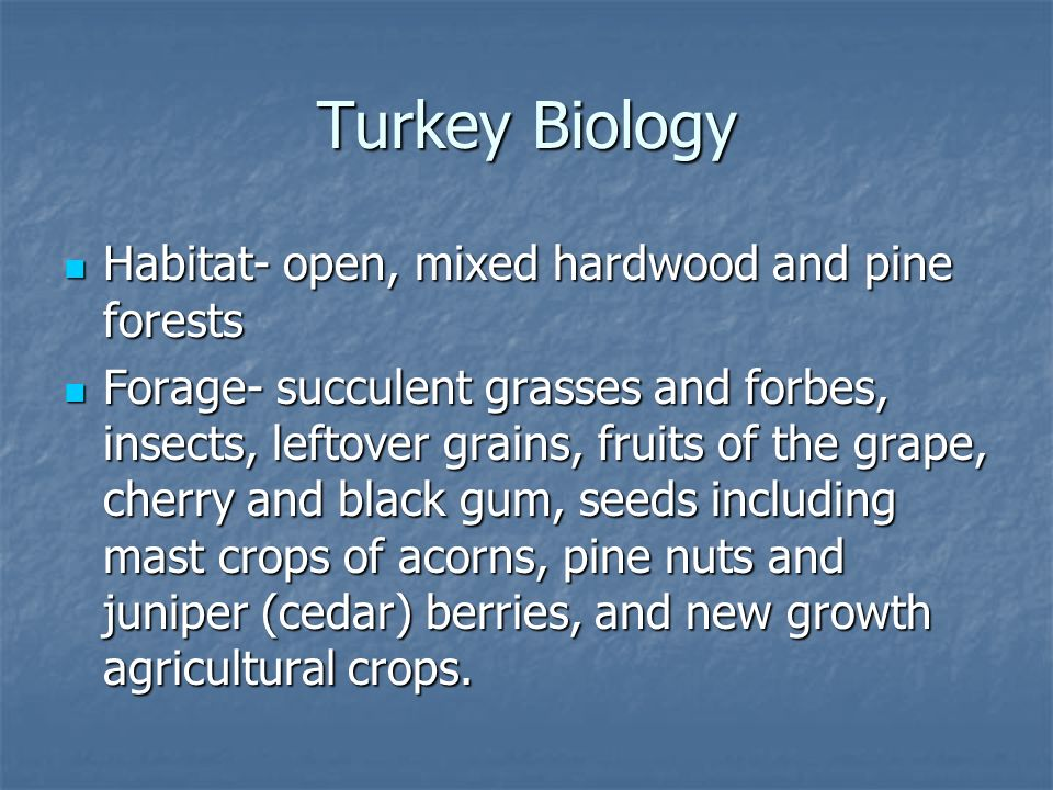 Turkey Biology Habitat- open, mixed hardwood and pine forests Habitat- open, mixed hardwood and pine forests Forage- succulent grasses and forbes, insects, leftover grains, fruits of the grape, cherry and black gum, seeds including mast crops of acorns, pine nuts and juniper (cedar) berries, and new growth agricultural crops.