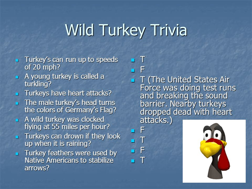 Wild Turkey Trivia Turkeys can run up to speeds of 20 mph.