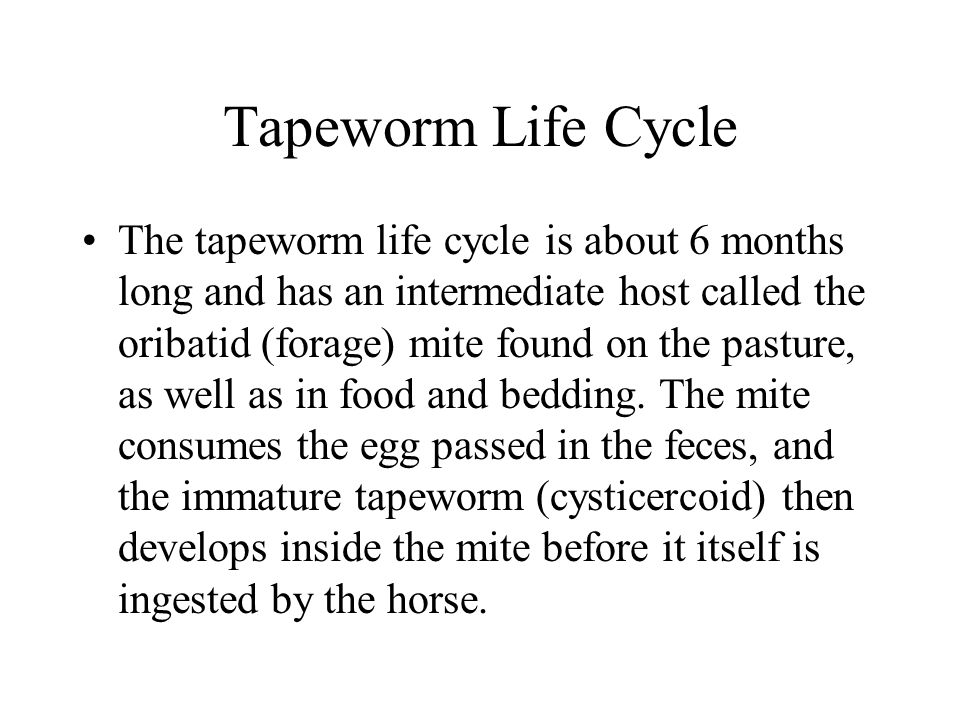 Tapeworm Life Cycle The tapeworm life cycle is about 6 months long and has an intermediate host called the oribatid (forage) mite found on the pasture, as well as in food and bedding.