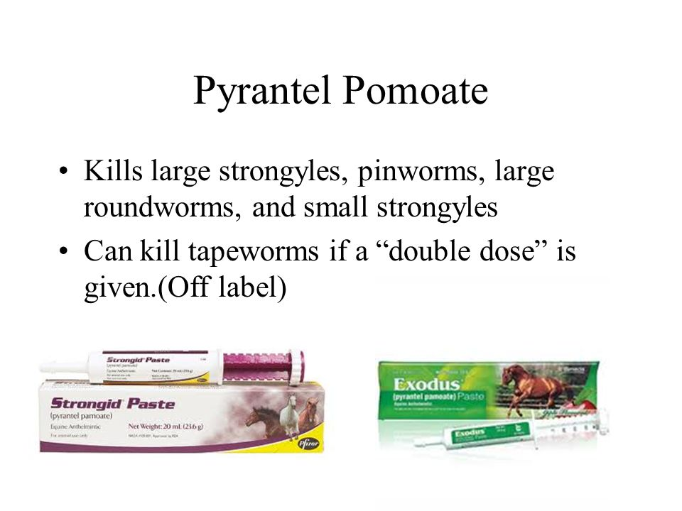 Pyrantel Pomoate Kills large strongyles, pinworms, large roundworms, and small strongyles Can kill tapeworms if a double dose is given.(Off label)