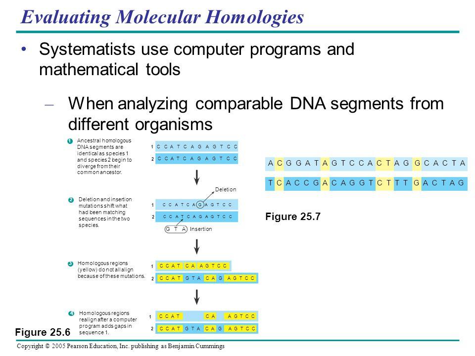 Copyright © 2005 Pearson Education, Inc. publishing as Benjamin Cummings Evaluating Molecular Homologies Systematists use computer programs and mathem