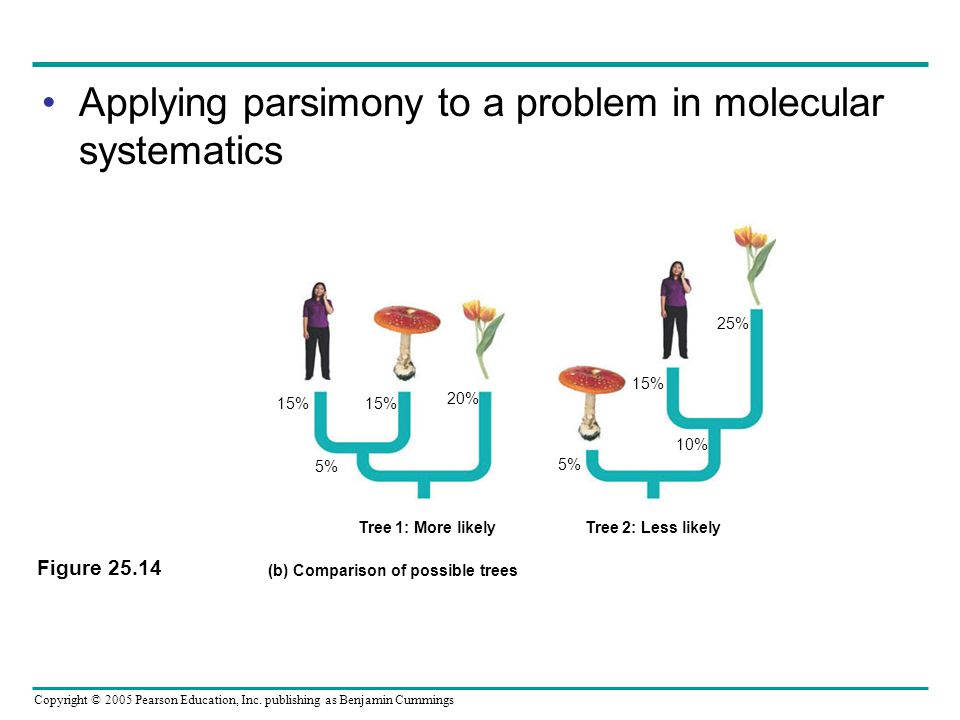 Copyright © 2005 Pearson Education, Inc. publishing as Benjamin Cummings Applying parsimony to a problem in molecular systematics Figure 25.14 Tree 1: